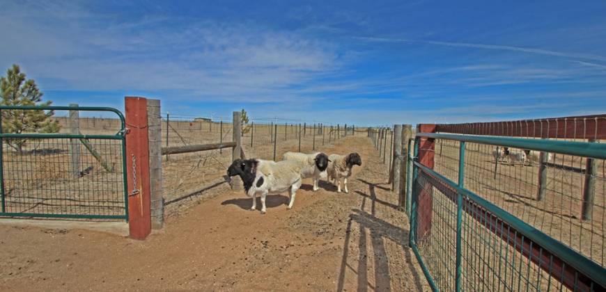 Beautiful Custom Ranch on 20 Acres!